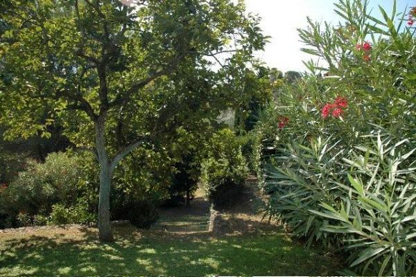 garden1AD3AE342-FF80-5041-3690-2C8AF2F88D70.jpg