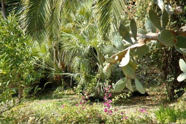 garden5FAF444A7-AB9E-6D6E-B810-4335C32FD9ED.jpg